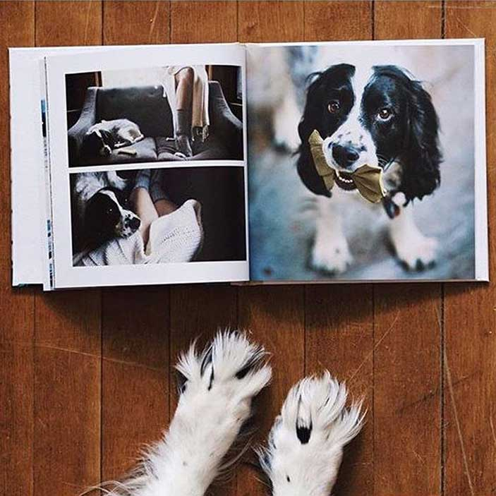 My Furry Friend photo book