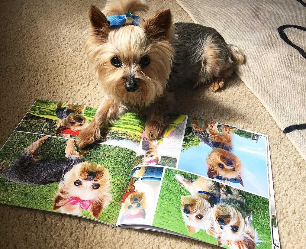 Photos of Fido photo book
