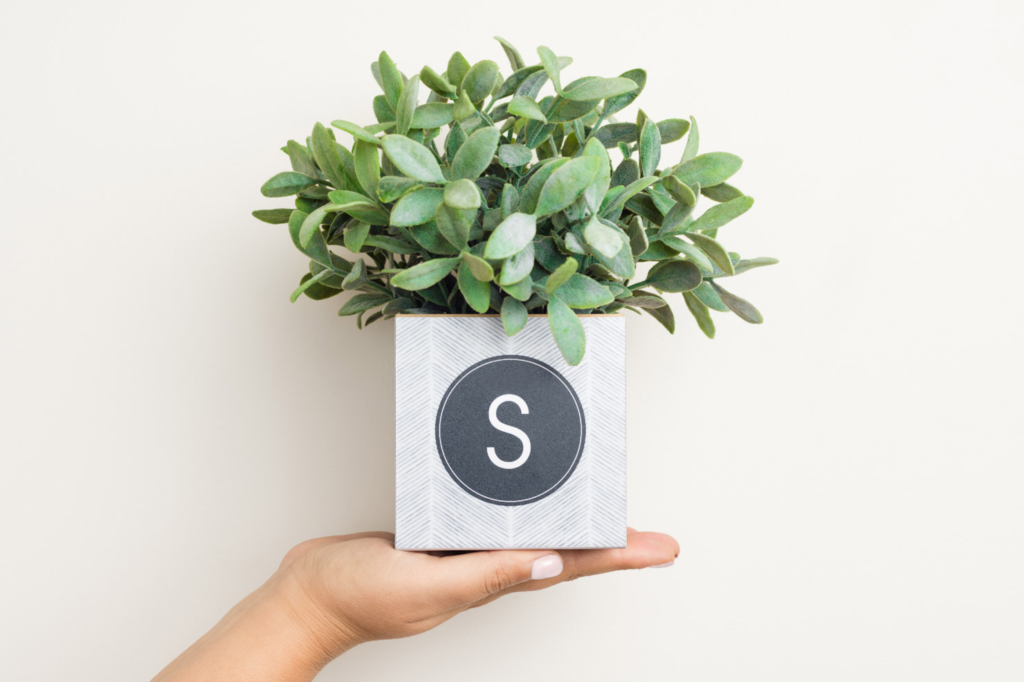 monogrammed cube holds a plant