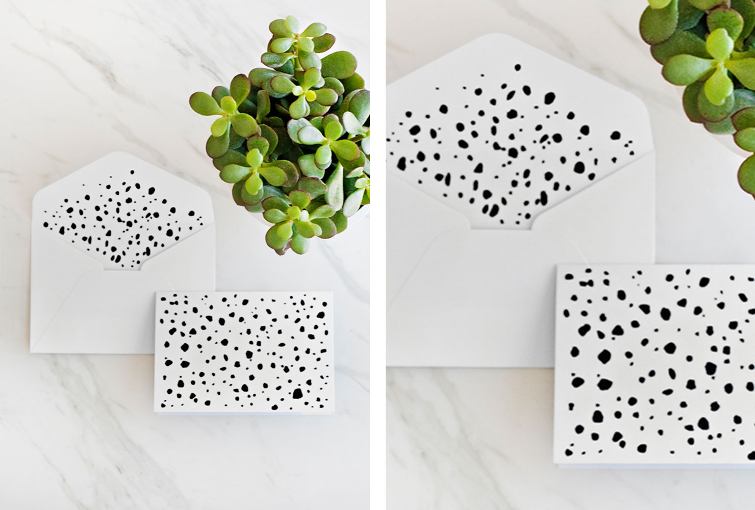 White stationary with black spots and green plant