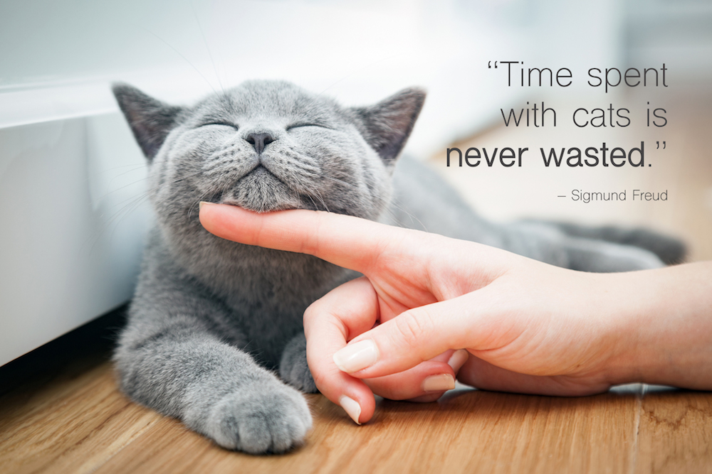 Happy kitten likes being stroked by woman's hand. cat quote: time spent with cats is never wasted.