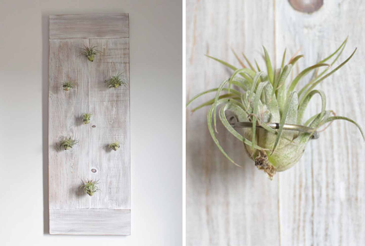 indoor plant decor air plant wall