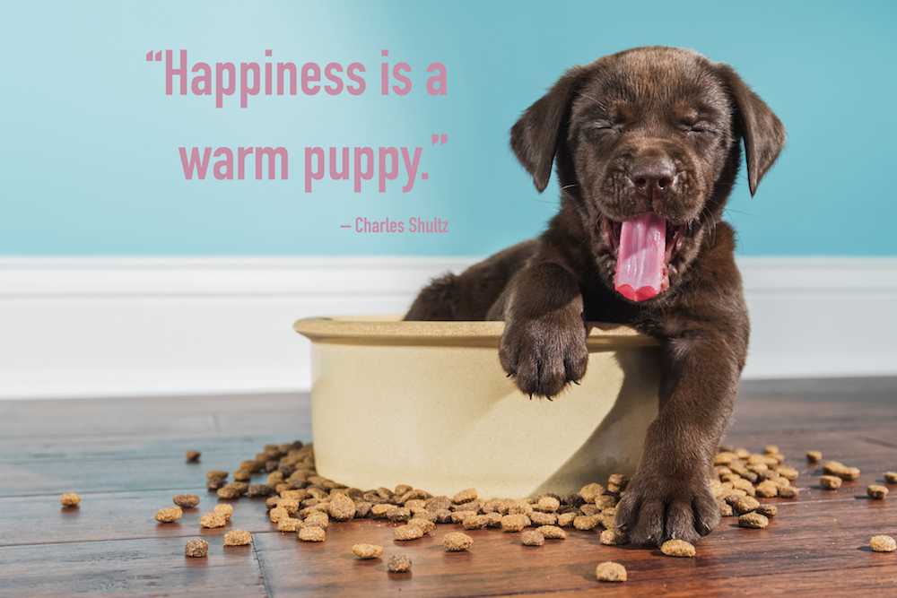 puppy quotes over a puppy yawning