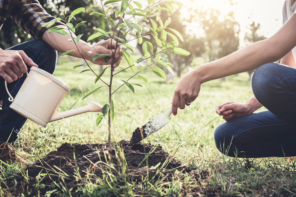 how to keep someone's memory alive by planting a tree