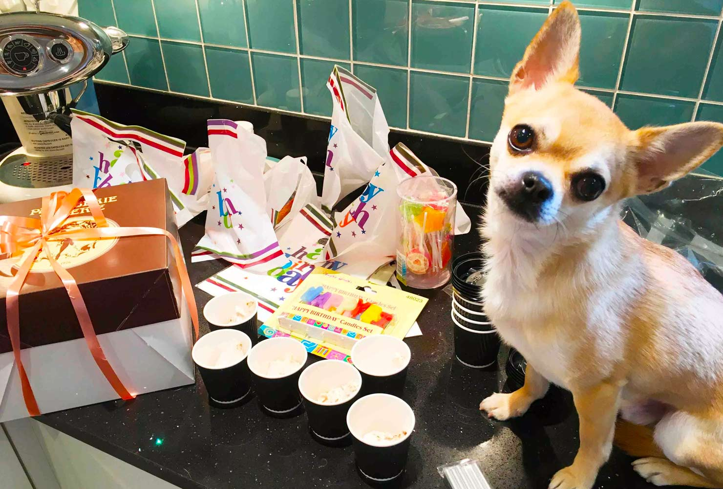 dog birthday party ideas goodie bags