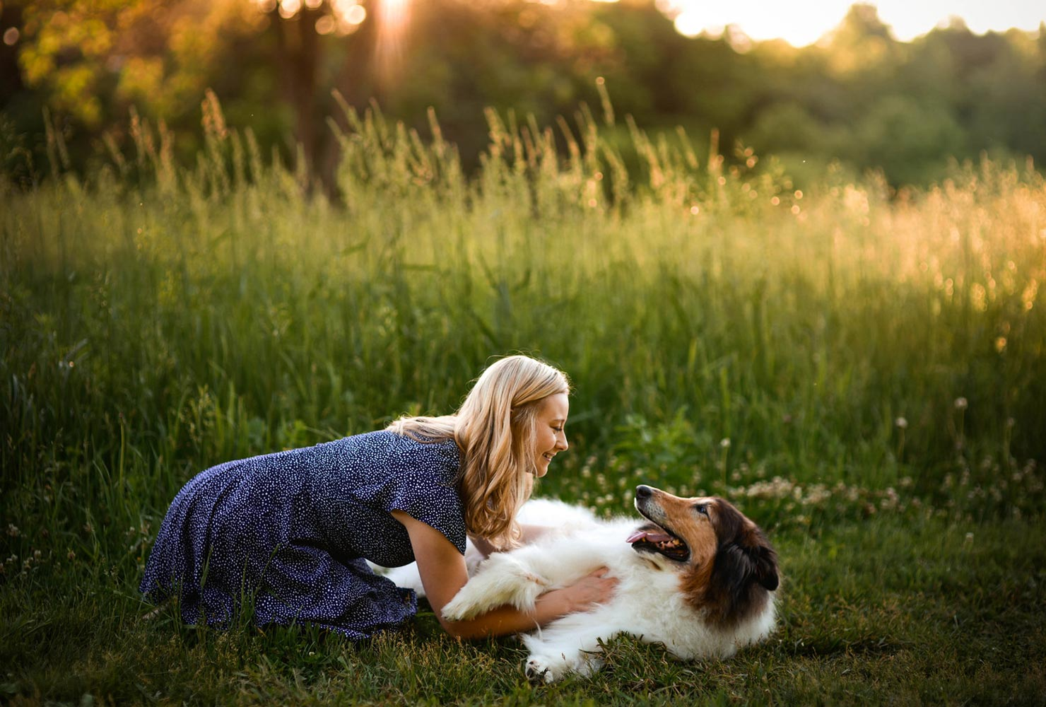 dog picture idea collie owner field