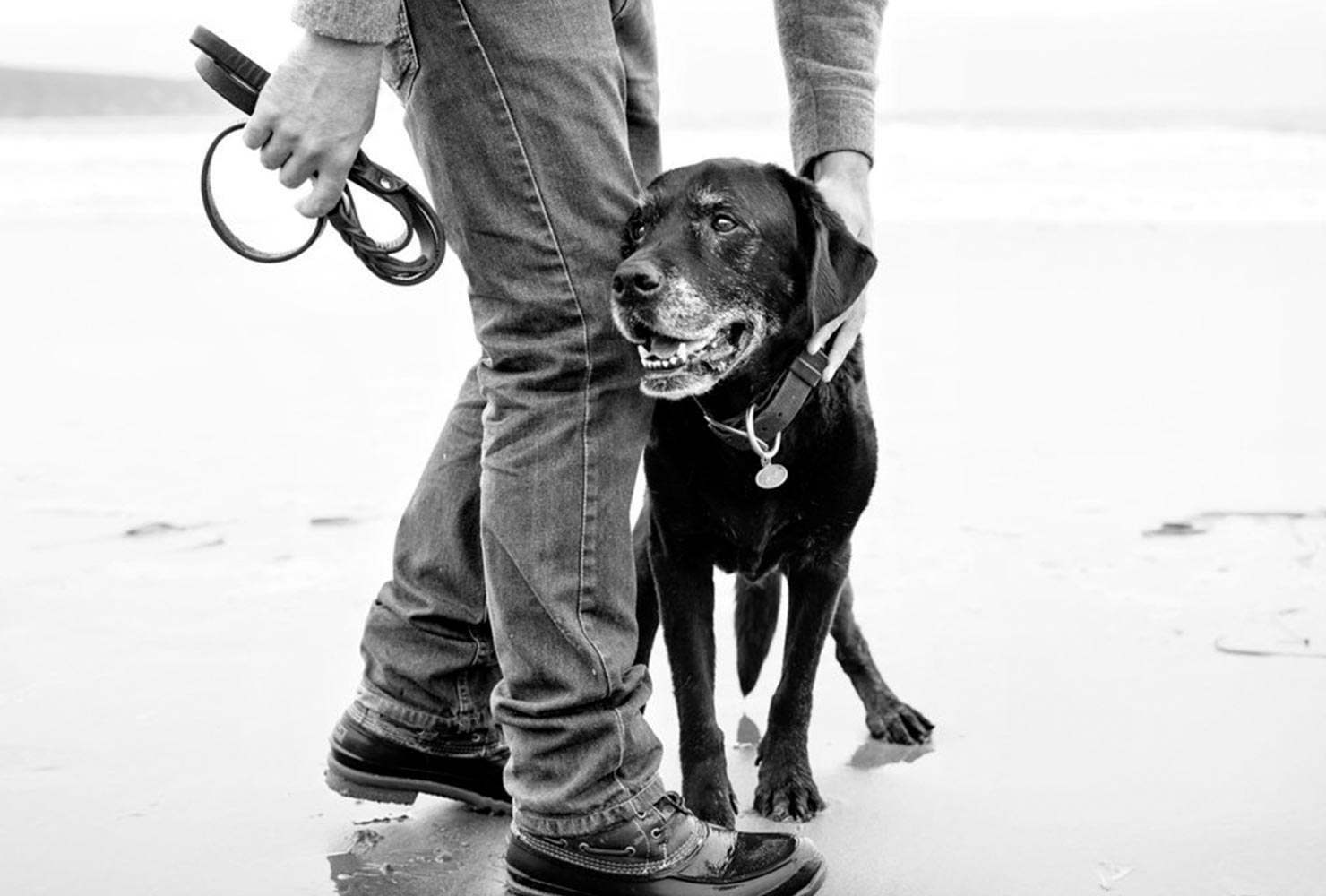 dog picture idea old lab BW