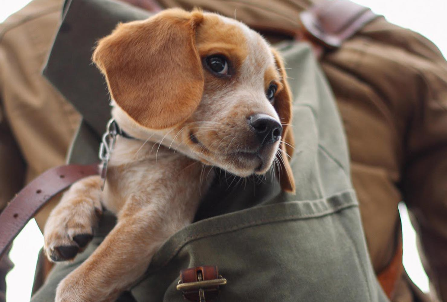 dog picture idea owner backpack