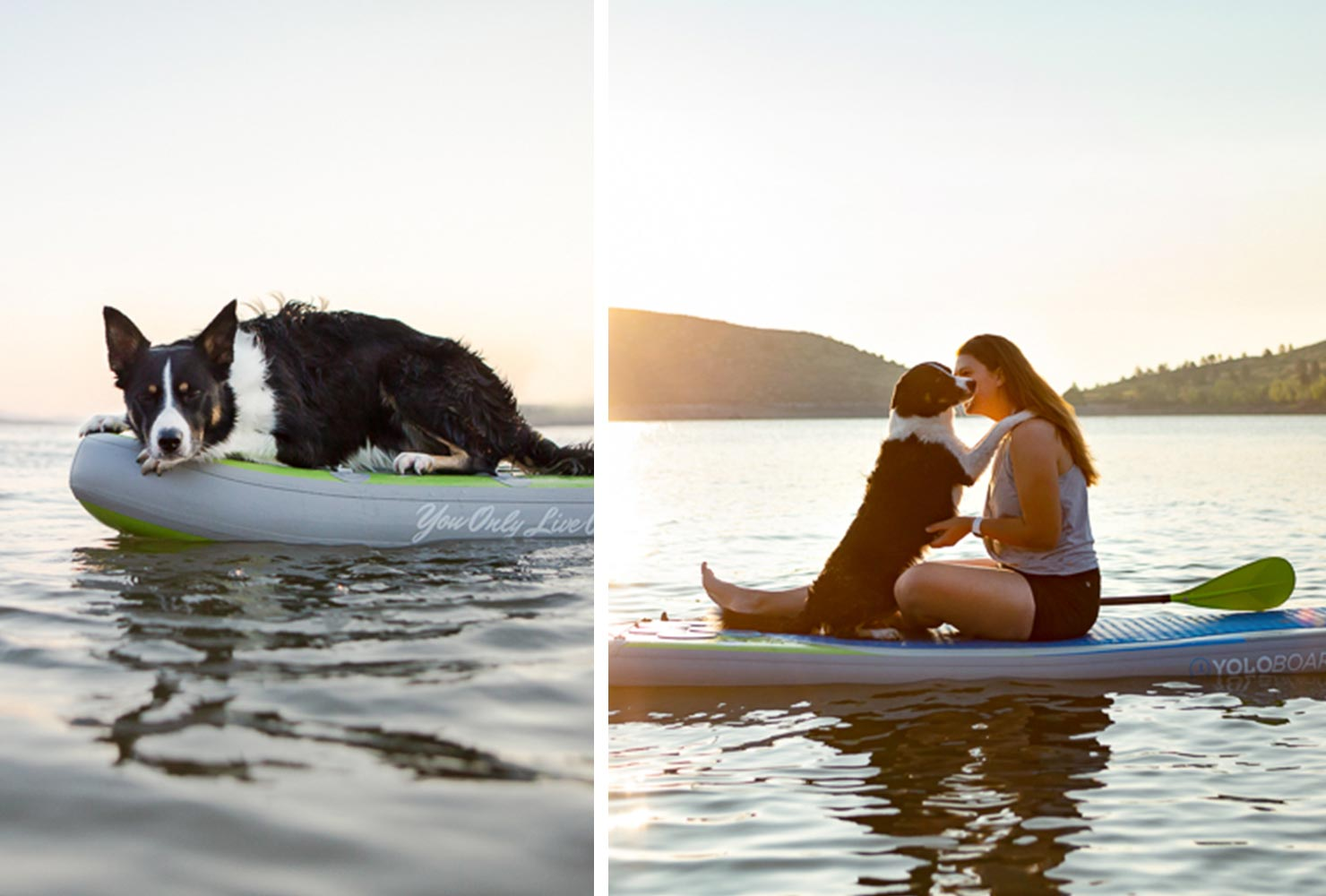 dog picture idea owner paddle board