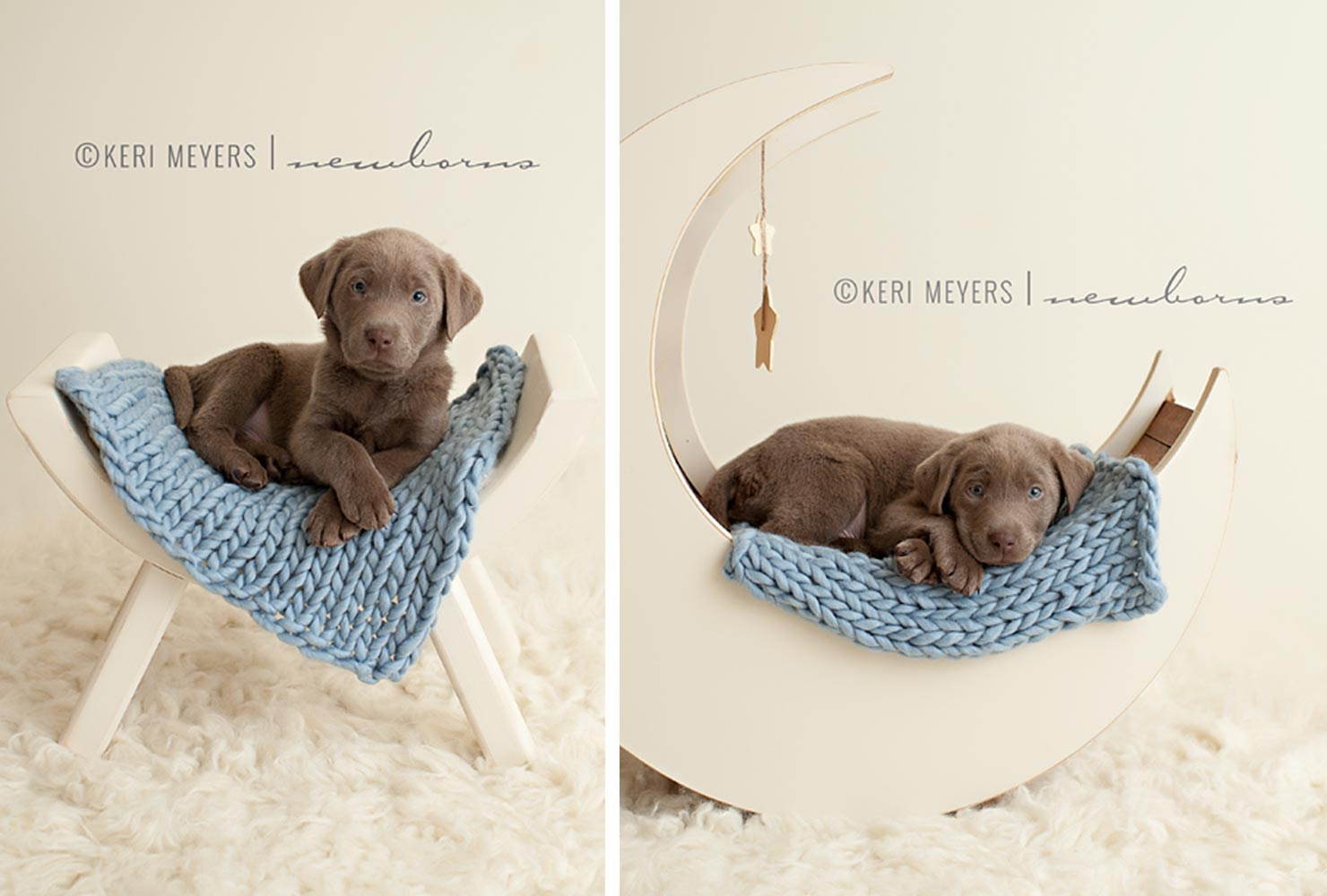 puppy photo choc lab moon