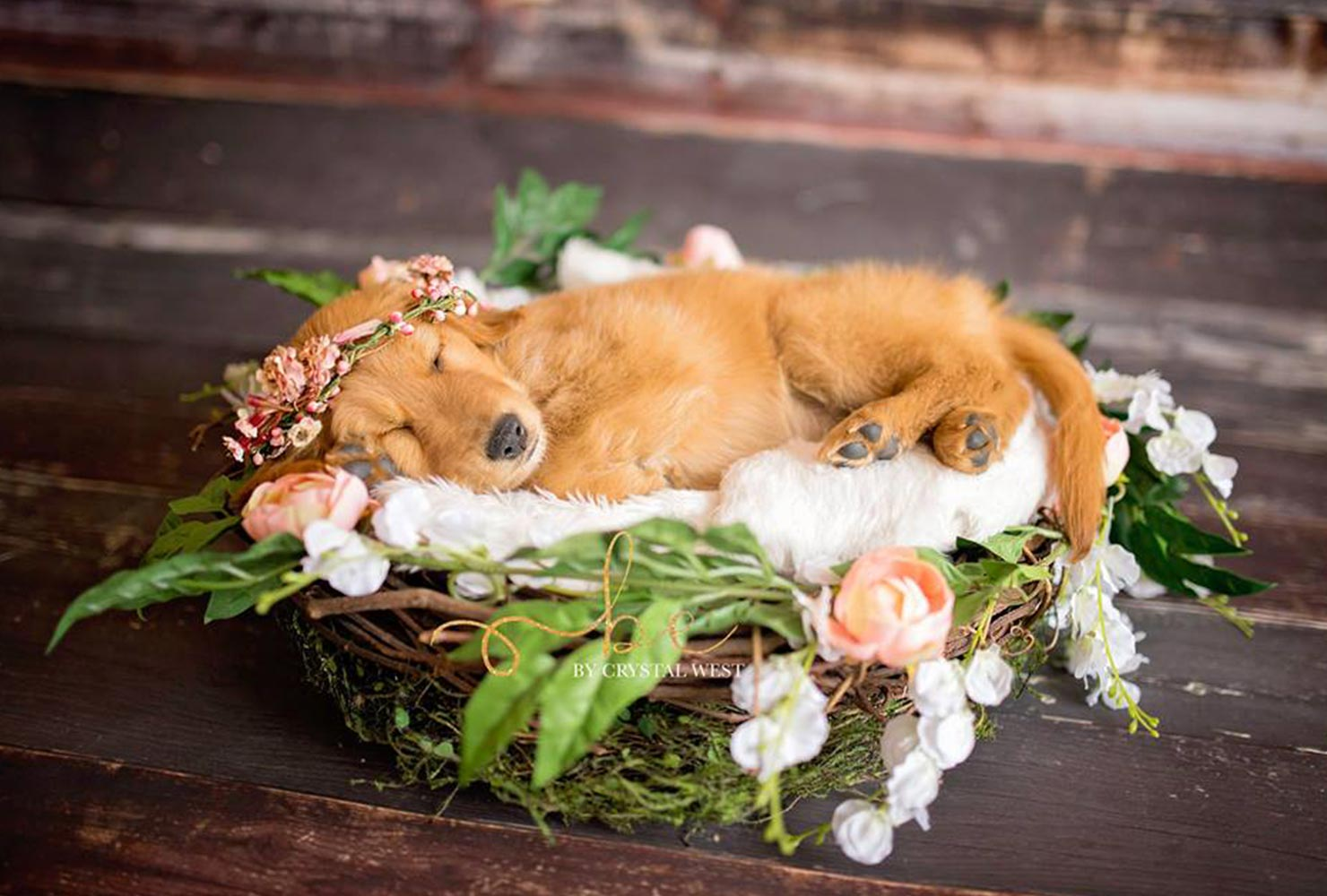 puppy photo goldie sleeping flower basket