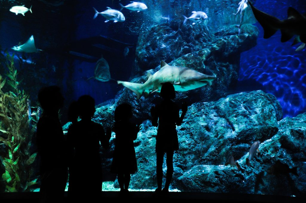 Silhouettes of birthday party with two kids in oceanarium, looking at fishes in aquarium