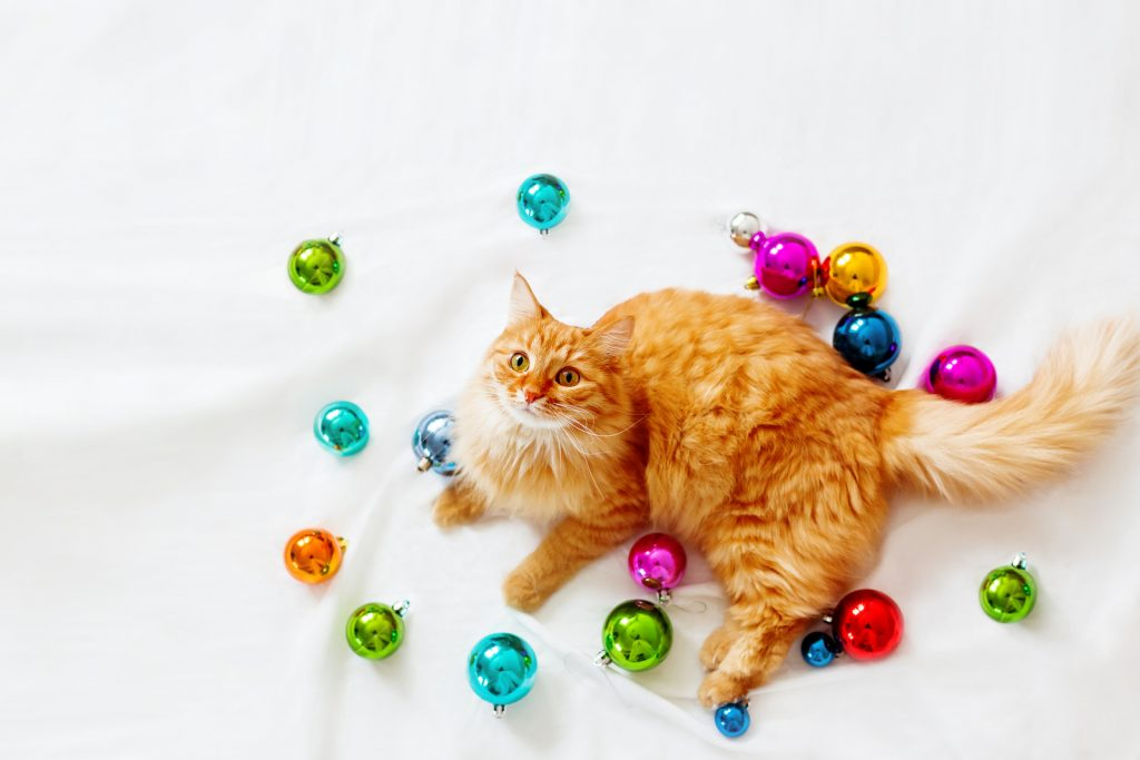 Cute ginger cat lies among christmas decorations - bright colorful balls.