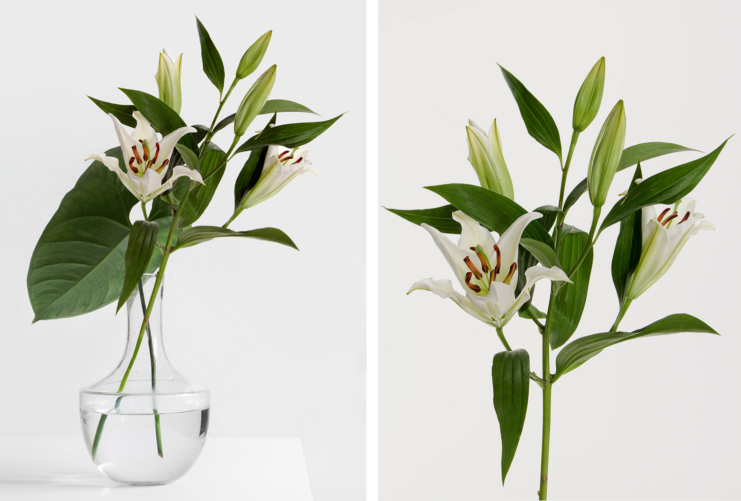 White lilies in vase.
