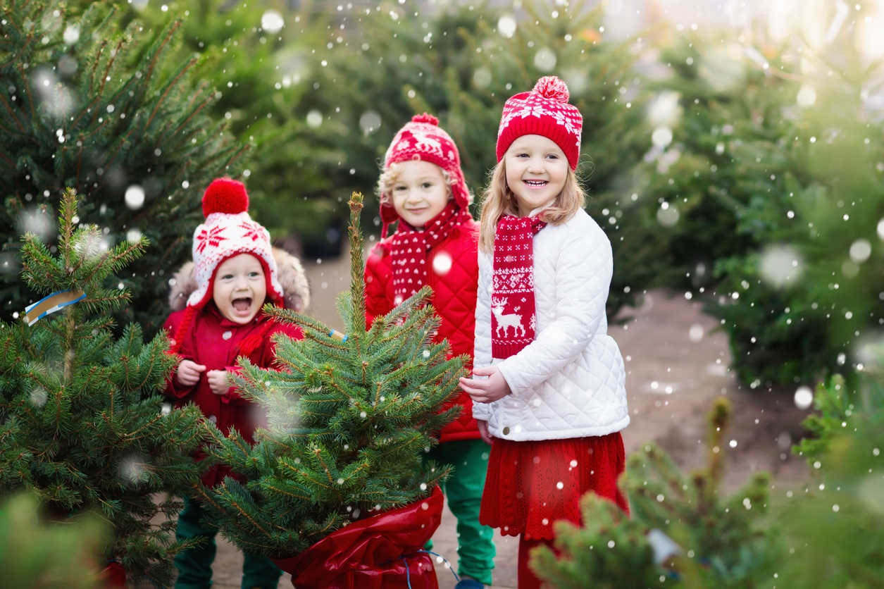 Family selecting Christmas tree. Kids choosing freshly cut Norway Xmas tree at outdoor lot. Children buying gifts at winter fair. Boy and girl shopping for Christmas decoration at market. Holiday time