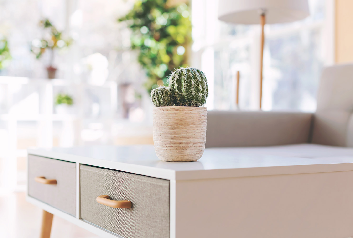 White coffee table with cactus plant.