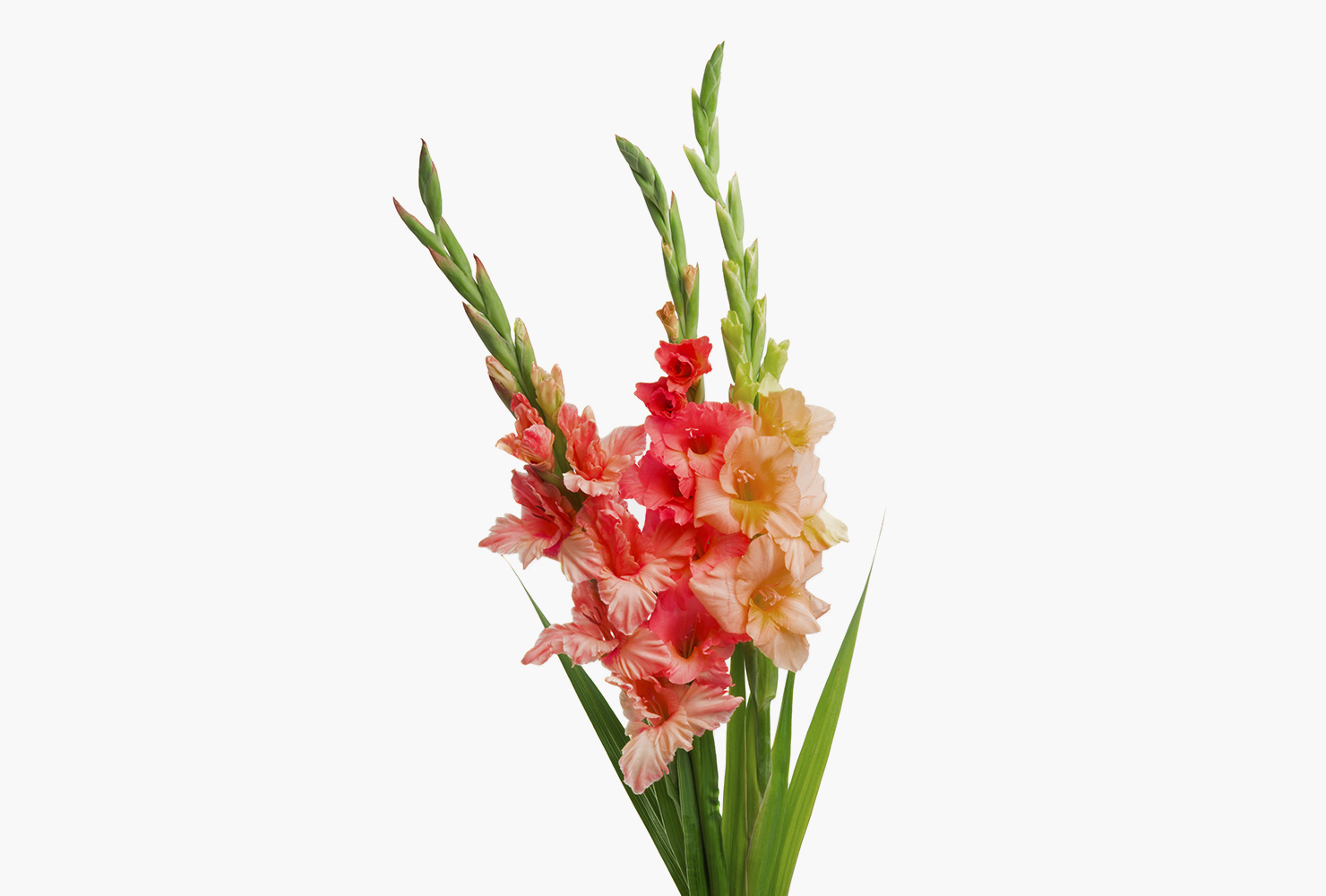 A bunch of gladiolus flowers.